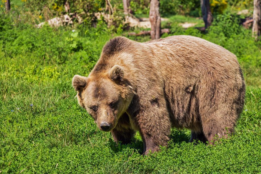 leave no trace gory smieci toaleta zwierzeta niedźwiedź